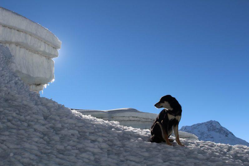 pas Mera na snijegu