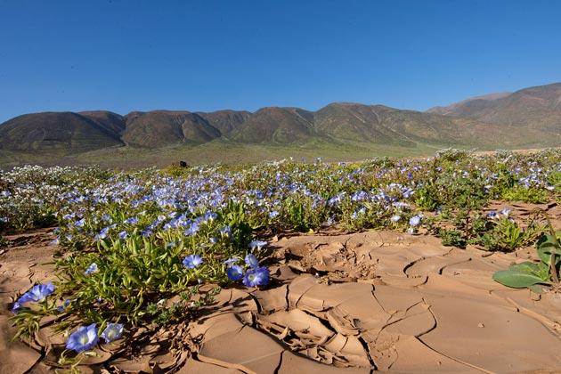 cvijece u pustinji