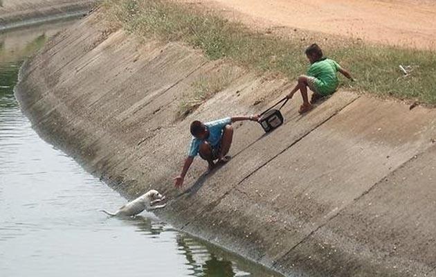 djecak i djevojcica pomazu psu da izađe iz vode