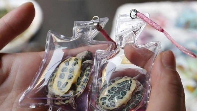 Kornjace u plasticnom privjesku