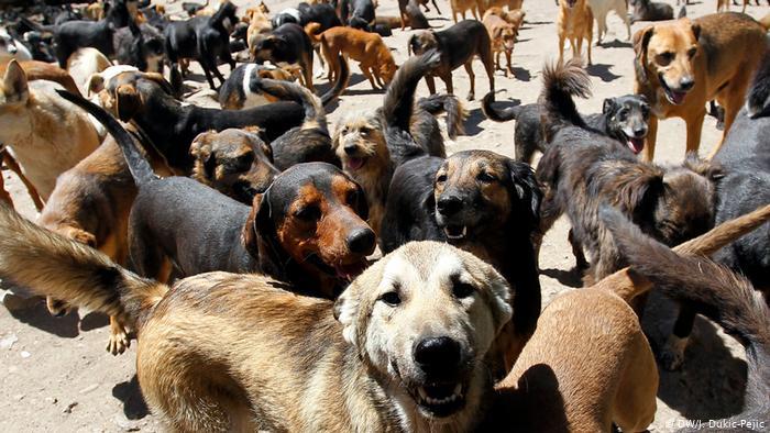 Psi u prihvatilistu