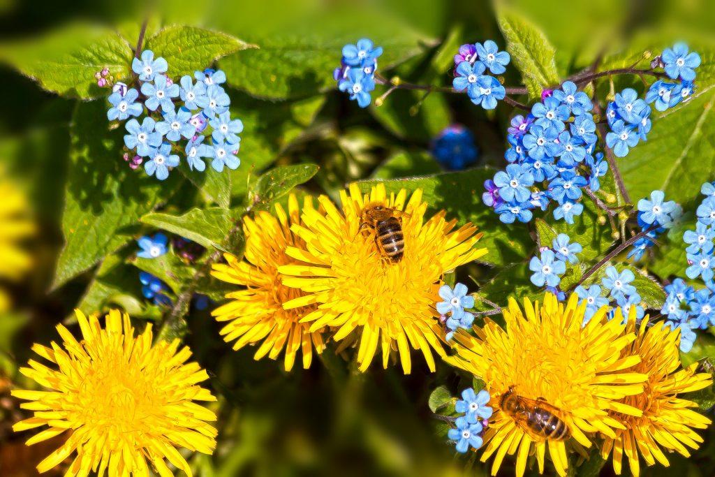 pcele i cvijece