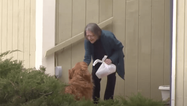 pas dostavlja namirnice