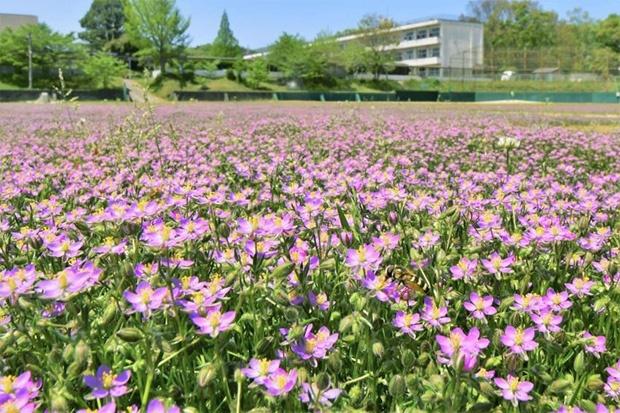 cvijece